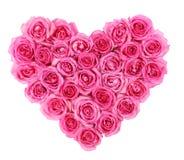 As rosas cor-de-rosa na forma do coração isolaram-se isolado no branco fotografia de stock