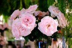 As rosas cor-de-rosa são grande condição bonita Foto de Stock