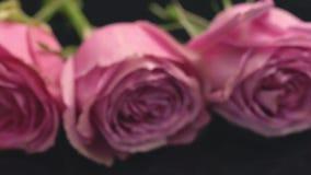 As rosas da cor cor-de-rosa em um fundo escuro o cheiro do frescor da surpresa do presente do ramalhete dos perfumes aumentaram vídeos de arquivo