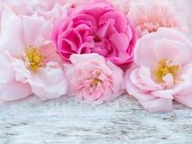 As rosas delicadas no branco rústico pintaram o fundo Foto de Stock