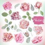 As rosas e as folhas grandes da aquarela ajustaram-se para ramalhetes, grinaldas, weddi Fotos de Stock