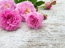 As rosas e os botões antigos no branco pintaram a placa Fotos de Stock Royalty Free