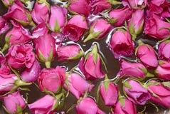 As rosas fecham-se acima Fotos de Stock