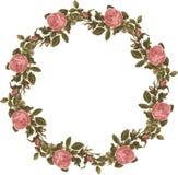 As rosas florais gastos do vintage envolvem-se no fundo branco isolado foto de stock
