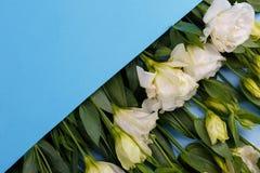 As rosas japonesas em um envelope azul encontram-se em seguido na diagonal em um fundo de madeira azul Foto de Stock Royalty Free