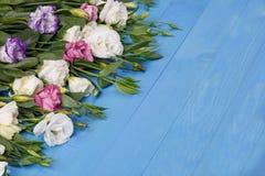 As rosas japonesas encontram-se em seguido na esquerda em um fundo de madeira azul Foto de Stock