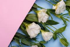 As rosas japonesas encontram-se em seguido em um envelope cor-de-rosa à esquerda em um ângulo em um fundo de madeira azul Imagem de Stock
