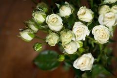 As rosas pequenas brancas bonitas frescas com água deixam cair indoor Imagens de Stock