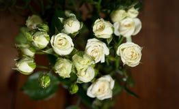 As rosas pequenas brancas bonitas frescas com água deixam cair indoor Fotos de Stock