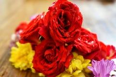 As rosas são vermelhas fotos de stock