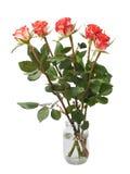 As rosas vermelhas frescas sobre o branco isolaram o fundo Foto de Stock Royalty Free