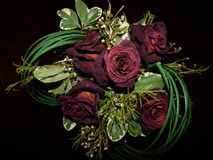 As rosas vermelhas naturais têm-no fotos de stock