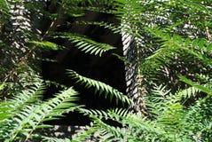 As ruínas cobertos de vegetação do teatro do verão fotos de stock royalty free