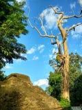 As ruínas da cidade antiga em ChiangSan Chaing Rai Tailândia Fotos de Stock