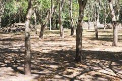 As ruínas maias de Las Sepulturas perto de Copan Imagem de Stock Royalty Free