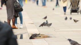 As ruas de Veneza, uma multidão de povos que andam o o quadrado - água da bebida do piggeon filme
