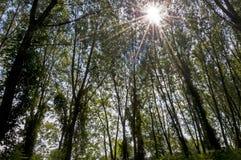 As rupturas do sol através das árvores Fotos de Stock Royalty Free