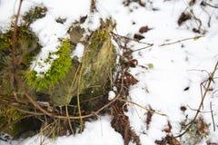 As rupturas verdes do musgo através da neve fotos de stock royalty free