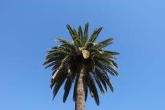 As ?rvores de coco imagem de stock