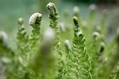 As samambaias saem folha verde do fundo floral natural da samambaia fotografia de stock
