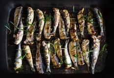 As sardinhas em uma frigideira grelharam com especiarias e alecrins Imagens de Stock