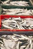 As sardinhas frescas, mackarels travam em uma caixa Foto de Stock Royalty Free