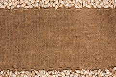 As sementes de abóbora estavam encontrando-se no pano de saco Imagens de Stock Royalty Free