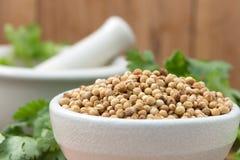 As sementes de coentro em uma bacia para adicionam o sabor a seu alimento em Choppin Imagens de Stock
