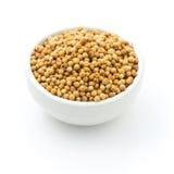 As sementes de coentro em uma bacia para adicionam o sabor a seu alimento no branco mim Foto de Stock Royalty Free