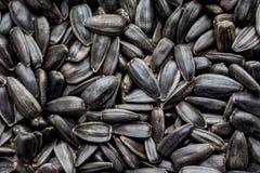 As sementes de girassol que encontram-se em uma placa podem servir como um background_ Imagem de Stock Royalty Free