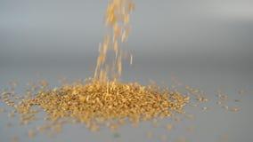 As sementes de linho caem em um fundo cinzento de cima de video estoque