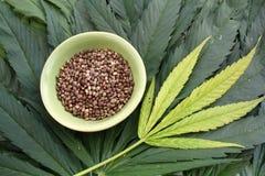 As sementes do cannabis da marijuana do cânhamo no ganja saem do fundo Fotos de Stock