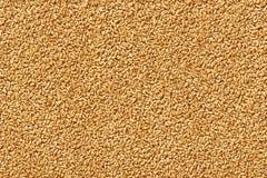 As sementes e as bagas do trigo fecham-se acima do tiro para a textura ou o fundo ilustração do vetor