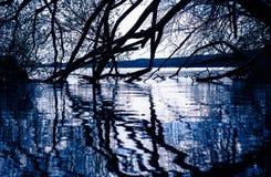 As silhuetas da árvore e os ramos refletem na água Imagens de Stock Royalty Free