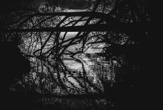 As silhuetas da árvore e os ramos refletem na água Fotografia de Stock