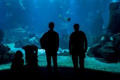 As silhuetas dos povos na frente dos tanques do oceanarium de Lisboa, multidão pequena aglomeraram-se ao vidro foto de stock
