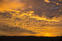 As sombras dos pássaros no fundo de um por do sol bonito Imagem de Stock Royalty Free