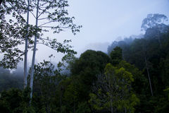 Hazy Blue Cloud Forest Top Royalty Free Stock Photos