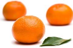 As tangerinas com folha fotos de stock royalty free