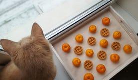 As tangerinas e os waffles encontram-se em uma bandeja de madeira foto de stock