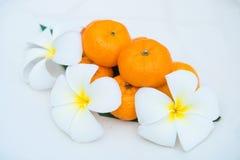 As tanjerinas frescas no prato branco decoram com flor Fotografia de Stock
