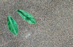As texturas da folha do Frangipani na terra fotografia de stock