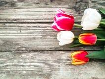 As tulipas ajuntam-se no fundo de madeira das pranchas do celeiro escuro Imagens de Stock