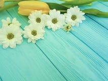 As tulipas bonitas da celebração do aniversário do crisântemo temperam o dia de mães do cumprimento do fundo, em um fundo de made Imagem de Stock Royalty Free