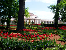 As tulipas brilhantes crescem no parque Fotos de Stock