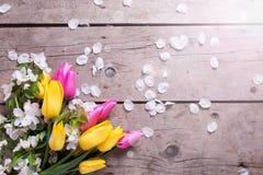 As tulipas brilhantes da mola e a árvore de maçã amarelas e cor-de-rosa florescem sobre Imagem de Stock