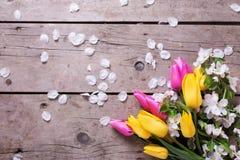 As tulipas brilhantes da mola e a árvore de maçã amarelas e cor-de-rosa florescem sobre Imagem de Stock Royalty Free