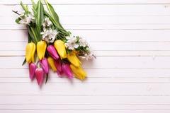 As tulipas brilhantes da mola e a árvore de maçã amarelas e cor-de-rosa florescem sobre Fotos de Stock Royalty Free