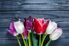 As tulipas coloridas fecham-se acima na tabela de madeira cinzenta Valentim, mola, o dia da mulher, fundo do dia de mães Zombaria fotografia de stock