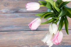 As tulipas coloridas florescem no fundo de madeira azul da tabela da mesa Copie o espaço Imagens de Stock